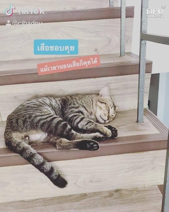 在哪都能睡着