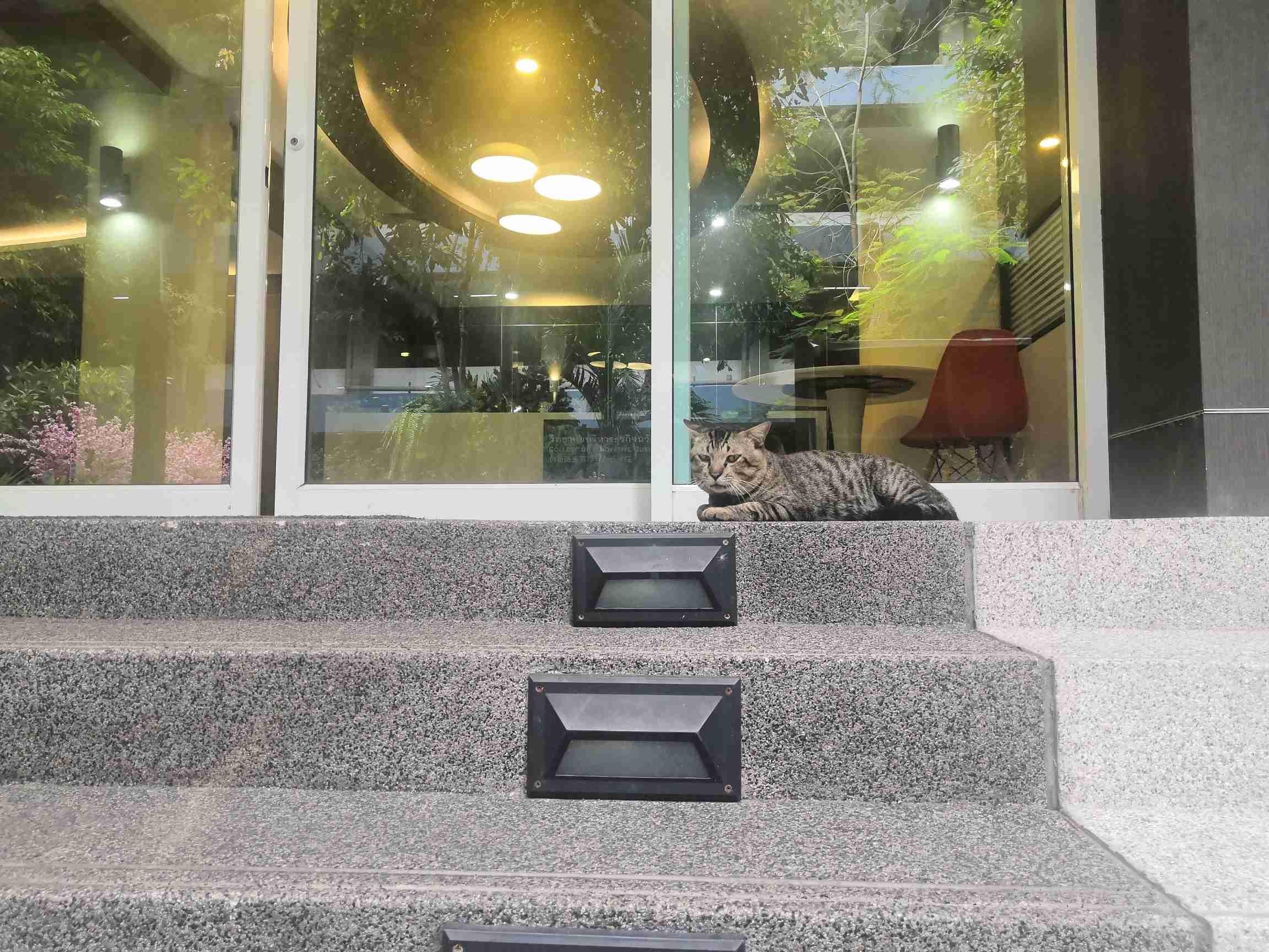 小Tiger日常看门,等小姐姐撸猫中 by Miao