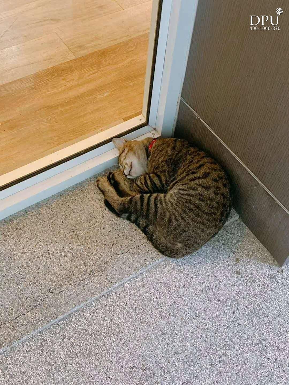 夜场小王子一到白天都是瞌睡 By Miao