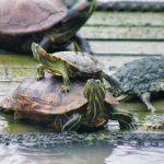 博仁大学龟池-世界乌龟日